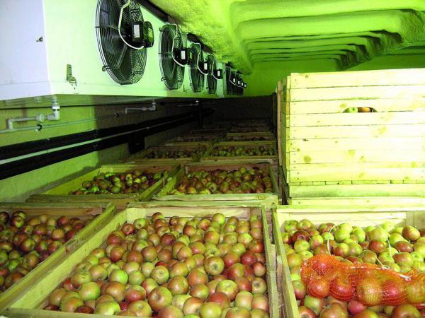 Холодильные камеры для фруктов